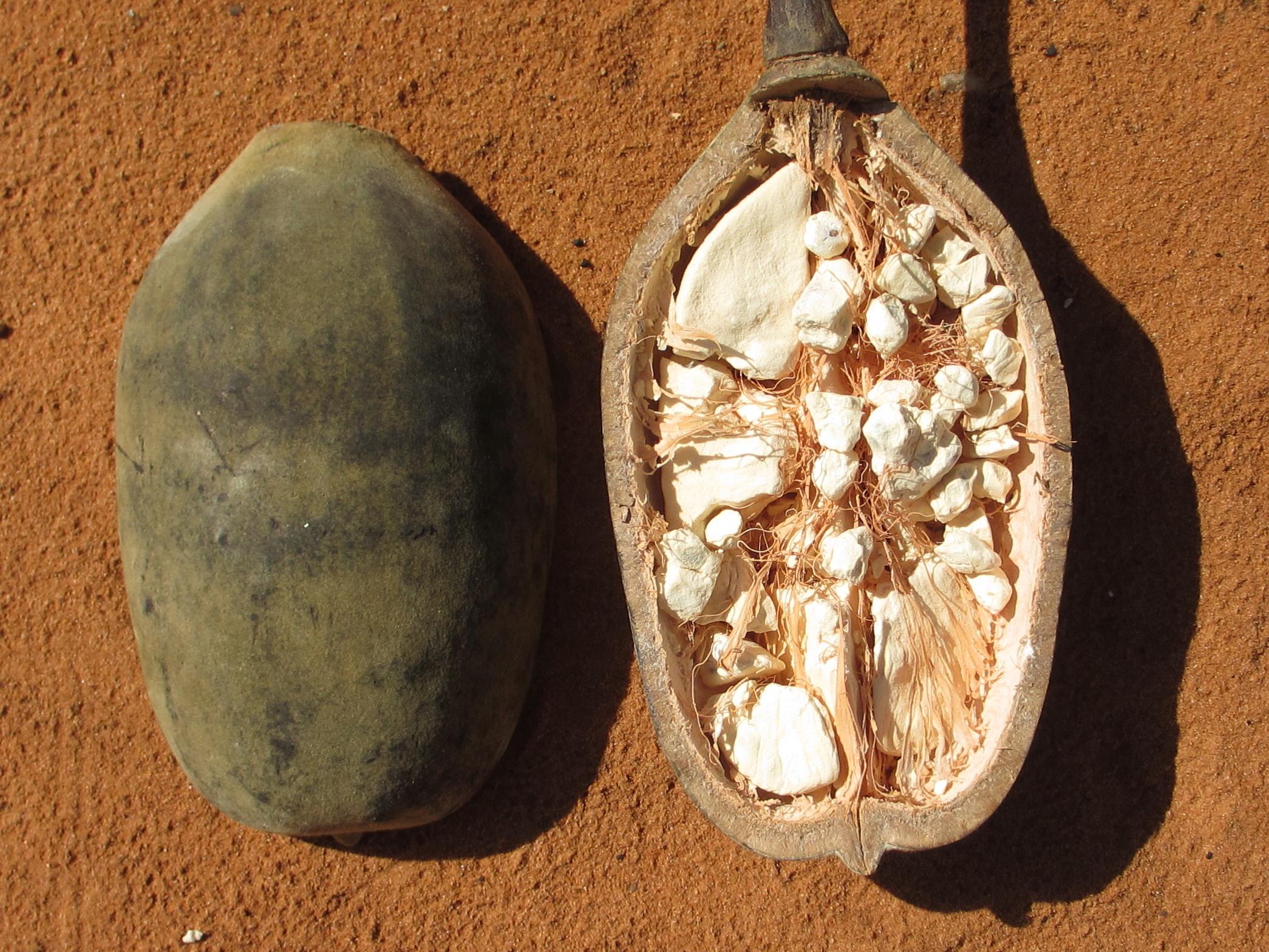 Baobab_-_fruit_8750413322